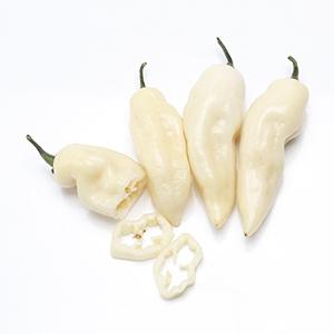 Habvanero Bianco Agricentro Ariccia