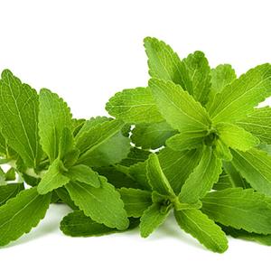 Stevia Agricentro Ariccia
